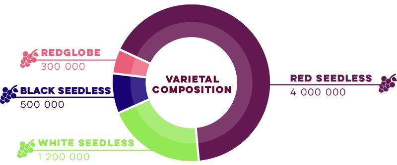 Varietal Composition