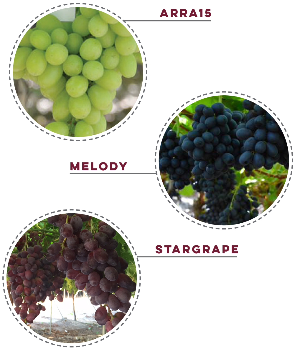 varieties grapes